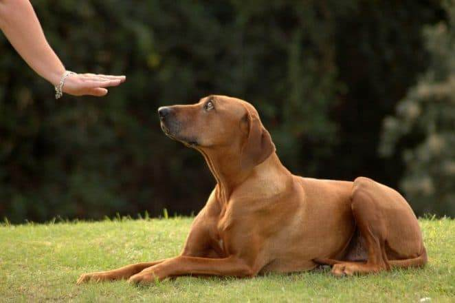 Dog Hand Commands