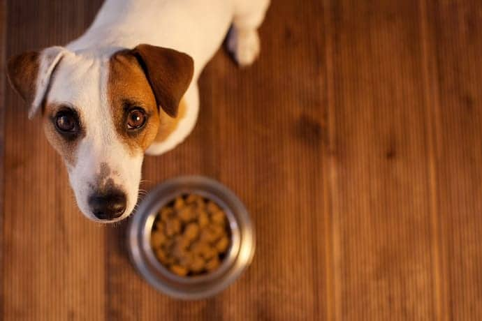 Dogs Left Alone Food