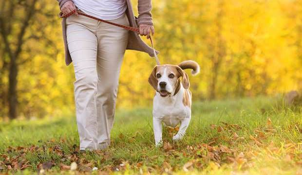Exercise your dog