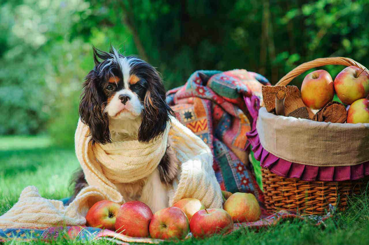 Fruits And Vegetables Your Dog