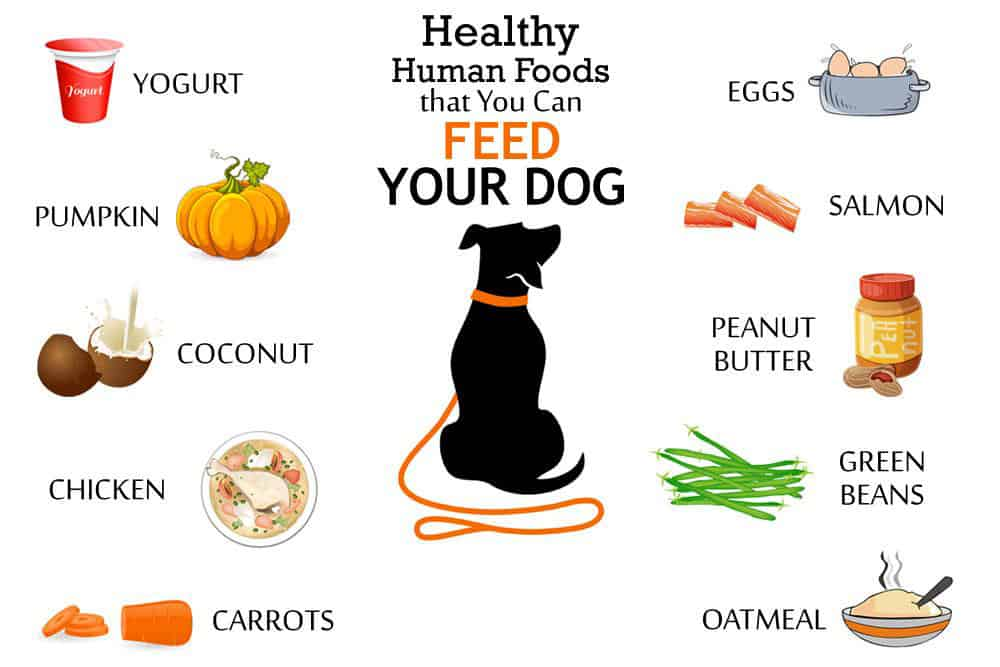 Healthy-Food-for-Dog