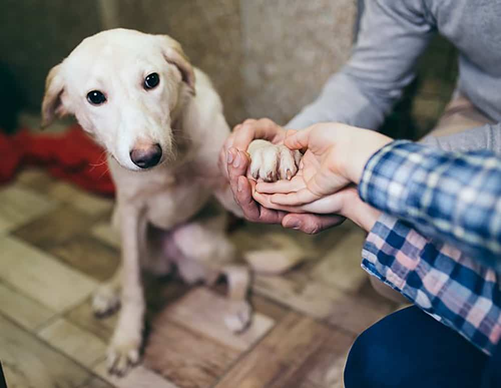 Heartworm Positive in Dogs