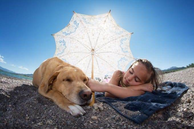 Keep Your Dog Safe In The Summer