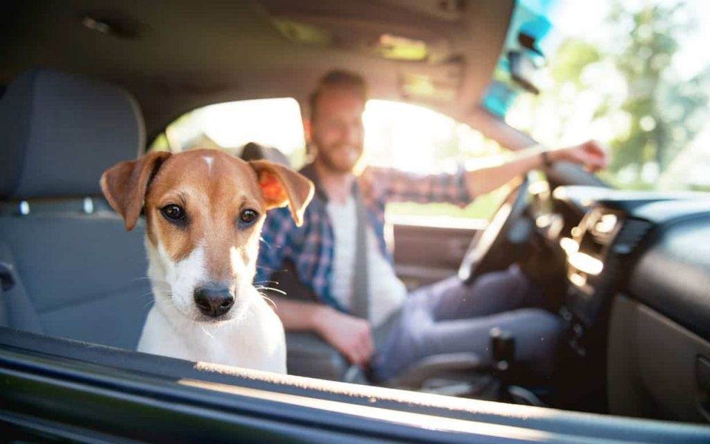 Pet Smells Out Of Your Car