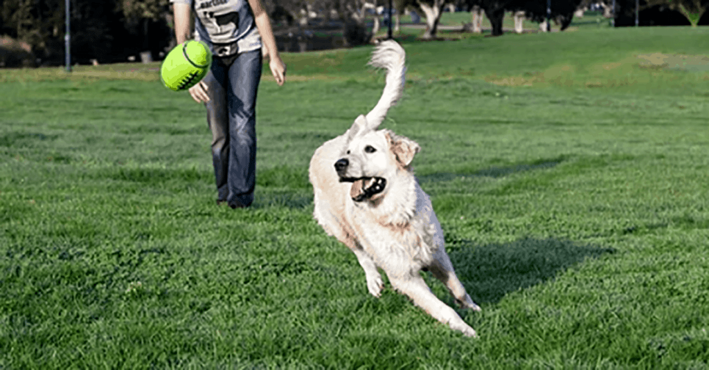 Play Fetch with your Dog