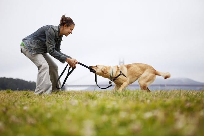 Practice tug-of-war with dog