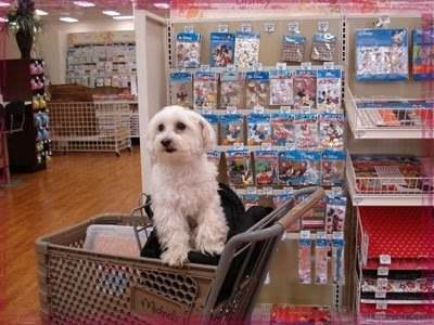 Shopping mall day with dog