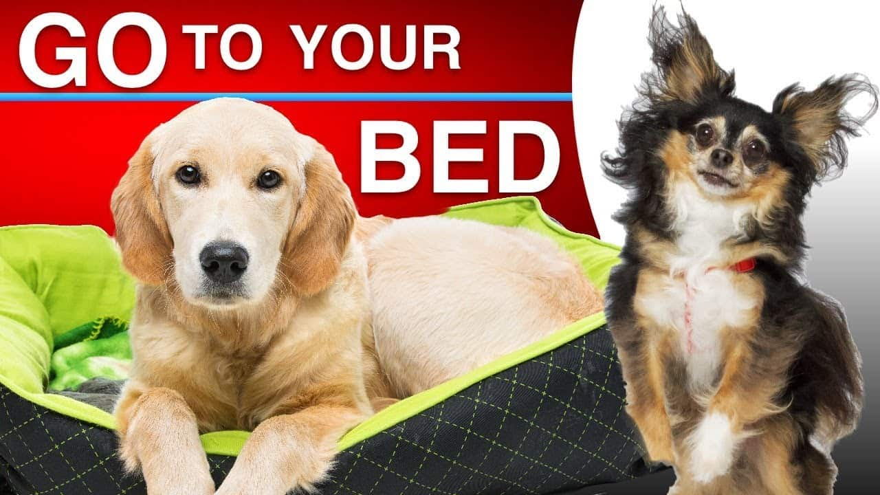 Teach Your Dog To Go To Bed