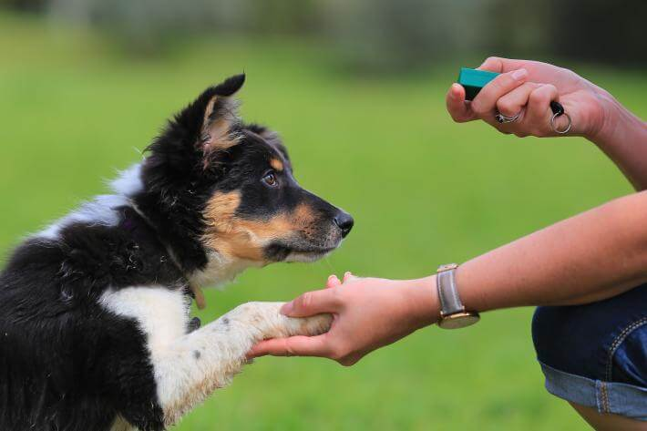 Tips on training your dog to wait before eating