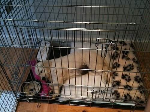 Use Crate Training