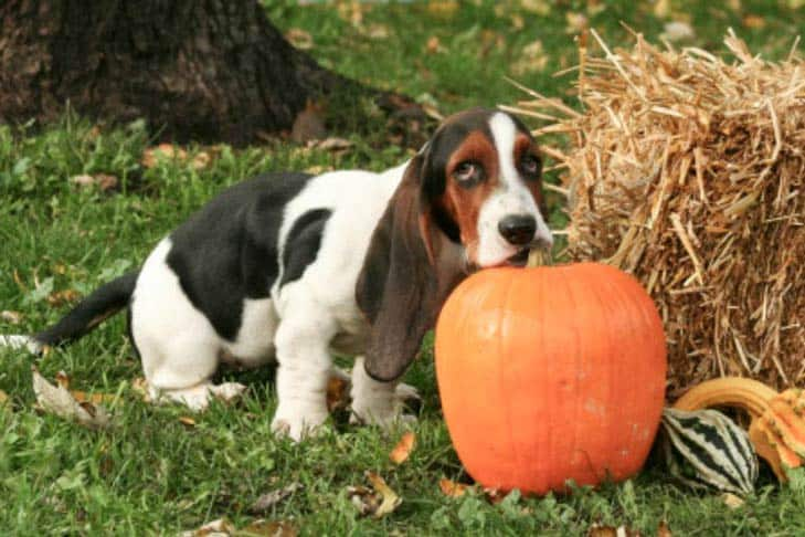preventing constipation on dogs