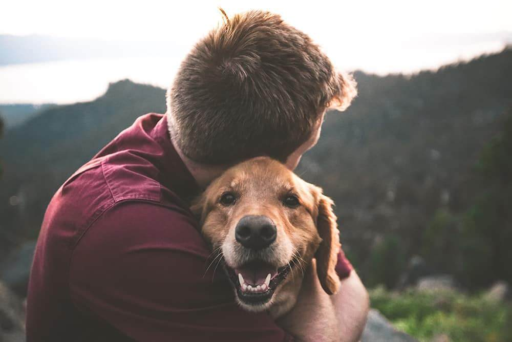 ways to build trust with your dog